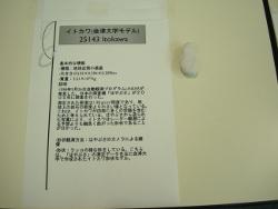イトカワ(会津大学モデル)